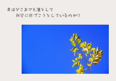 天に向かう枝