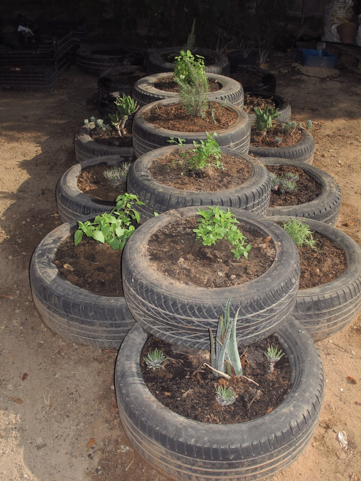 La huerta de mar a gonz lez plantas arom ticas y cactus for Jardin de plantas aromaticas