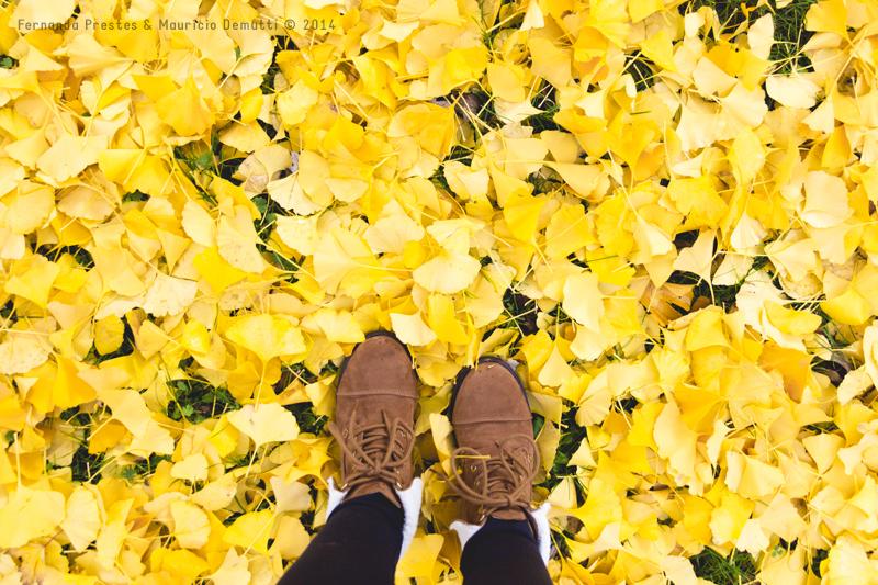 folhas amarelas outono Grund Luxemburgo