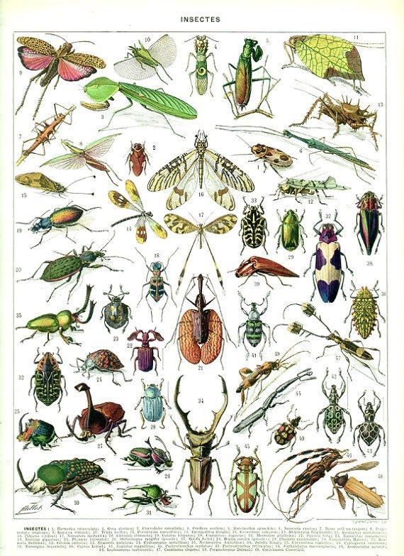 Invertebrados | Crustáceos e Insetos