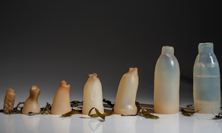 The Main Biodegradable Packaging Which Is Made From Seaweed