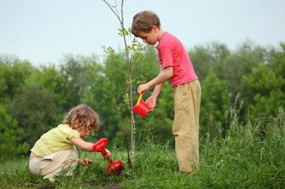 La importancia de los árboles para el planeta