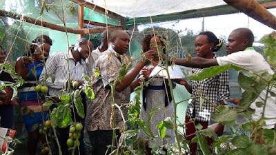 Leveraging on partnerships that helps farmers access biological pest control