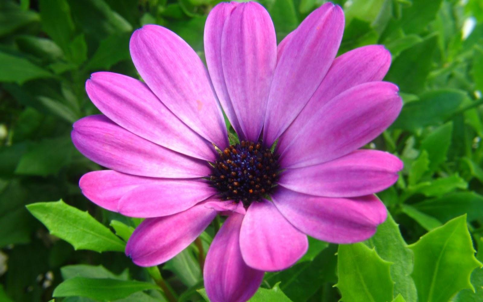 Purple Flowers HD Wallpapers