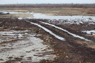 Tundra Tracks.