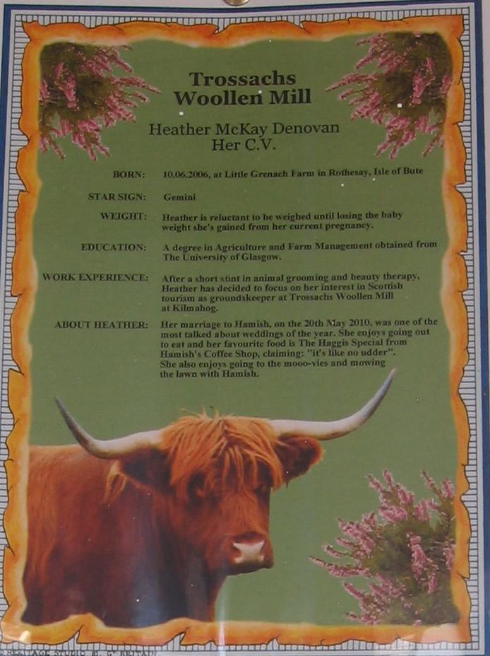 Hamish, The Highland Bull - The Globe Trotter