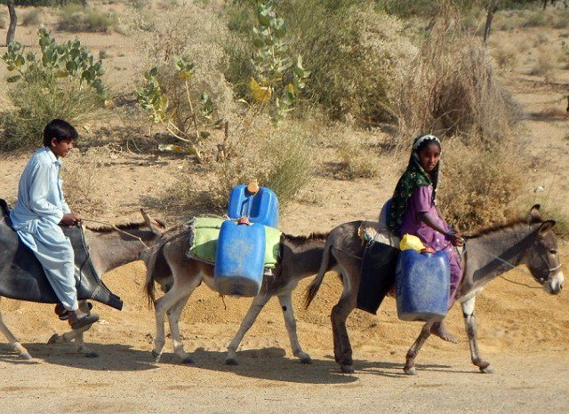 Children take water on donkeys in Tharparkar