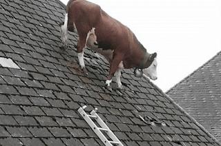 Material atap yang satu ini mempunyai bobot yang cukup berat, bahkan juga lebih berat dari pada tanah liat, jadi sebaiknya Anda juga mengunakan rangka atap rumah baja ringan.