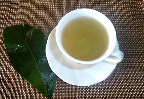 cara mengolah daun alpukat menjadi teh herbal