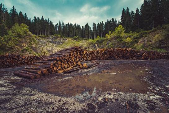 Forestry, Logging, Deforestation, Timber, Lumber