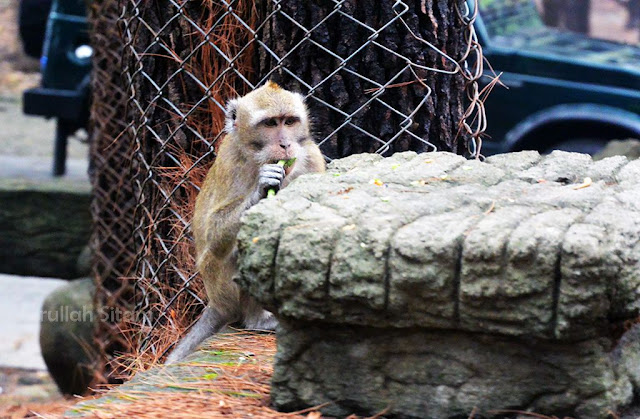 Hewan-hewan sedang menikmati makanan dari pengunjung kebun binatang
