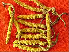 Herba Tradisional yang sesuai dengan badan manusia.