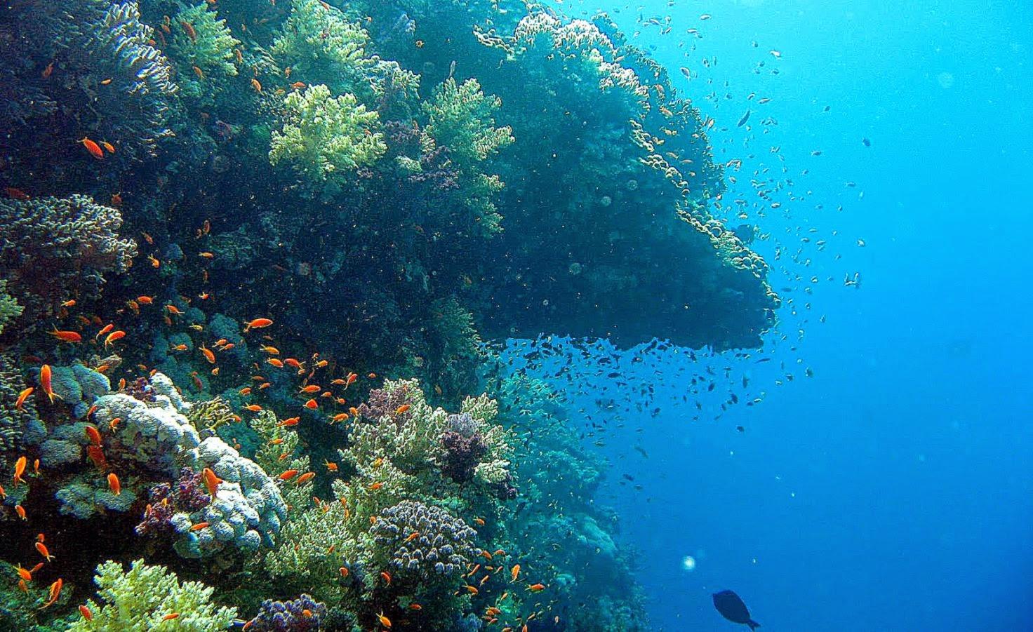 Underwater wallpaper hd - Underwater wallpaper for pc ...