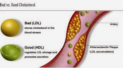 good-and-bad-cholesterol