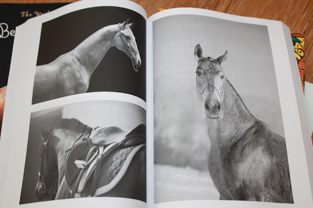 All About Horses Journal - Thinking Tree