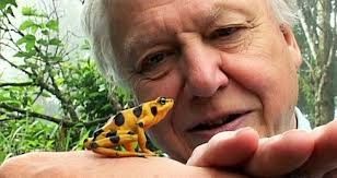 David Attenborough: Arkive