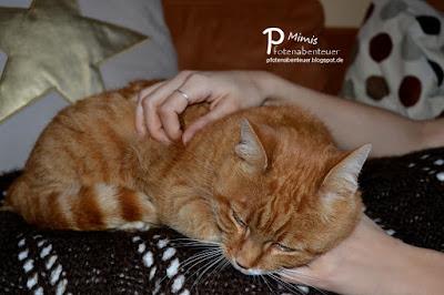 Katze Mimi als Krankenpflegerin