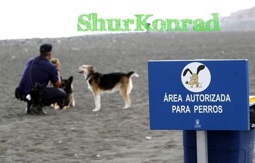 playas-perros- Argentina dog puppy cachorro ShurKonrad 1