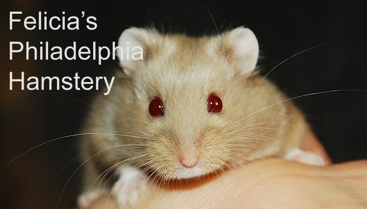 white dwarf hamsters with red eyes - photo #49