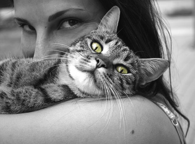gatos-armonizar-tu-salud