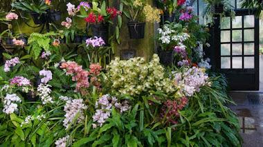 Identificando orquídeas cultivadas