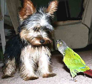 Parrot talks to dog
