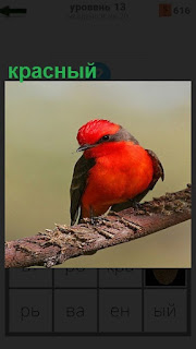 На ветке сидит птица с красным оперением и голова в том числе