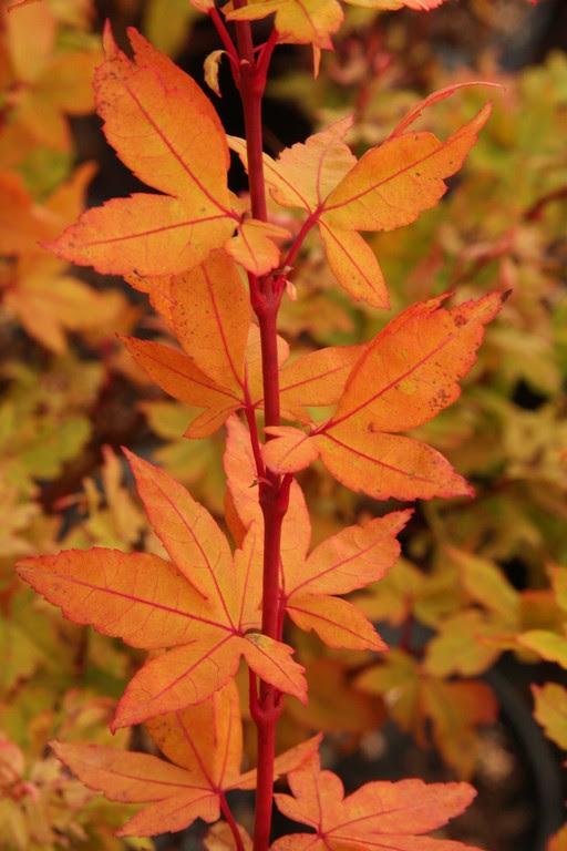 Flora Wonder Blog Selling Out