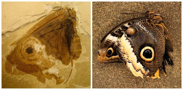 Scientists Discover Prehistoric 'Jurassic Butterfly'