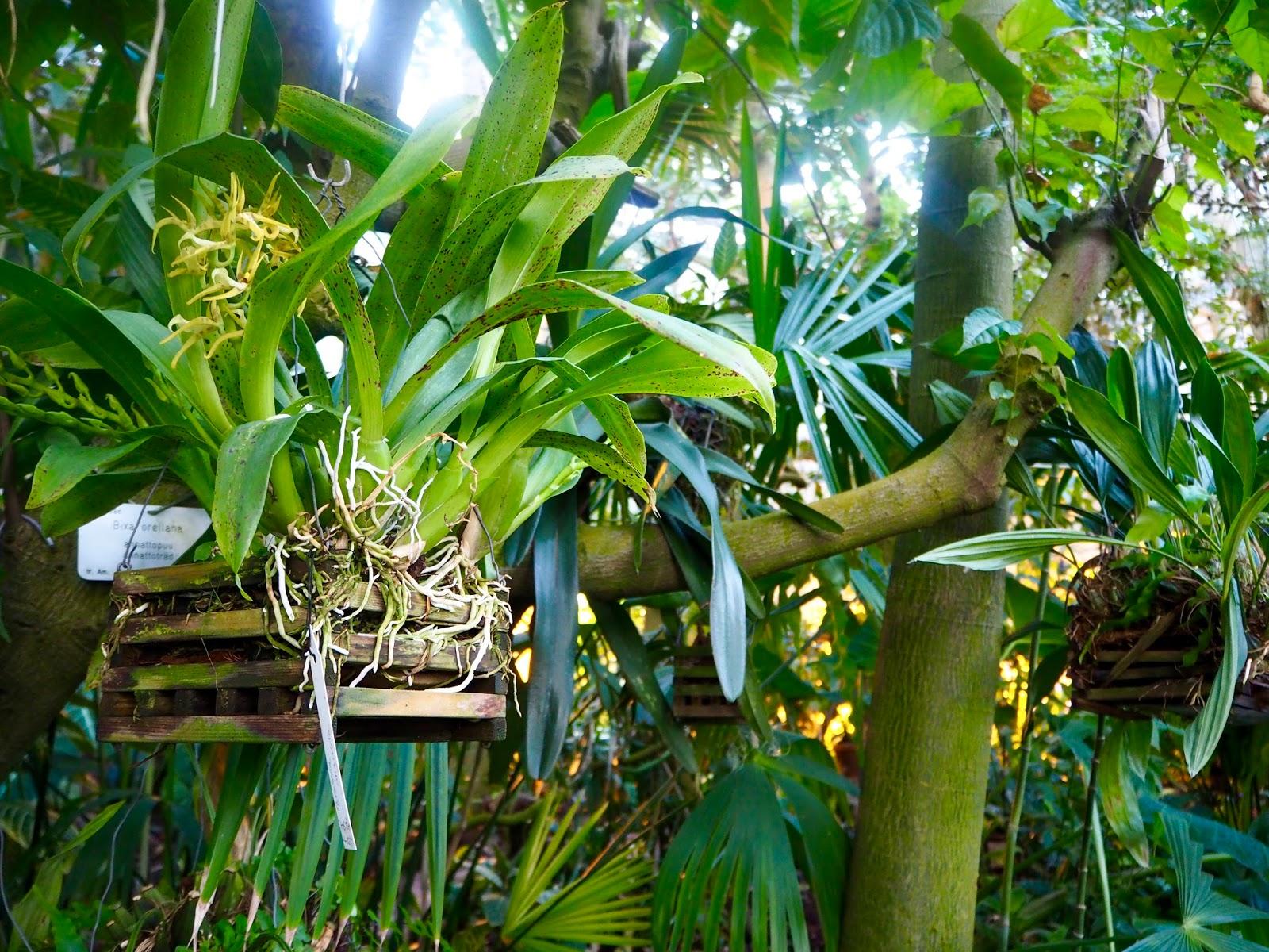 Ympärillä on upeita ja erikoisia kasveja!