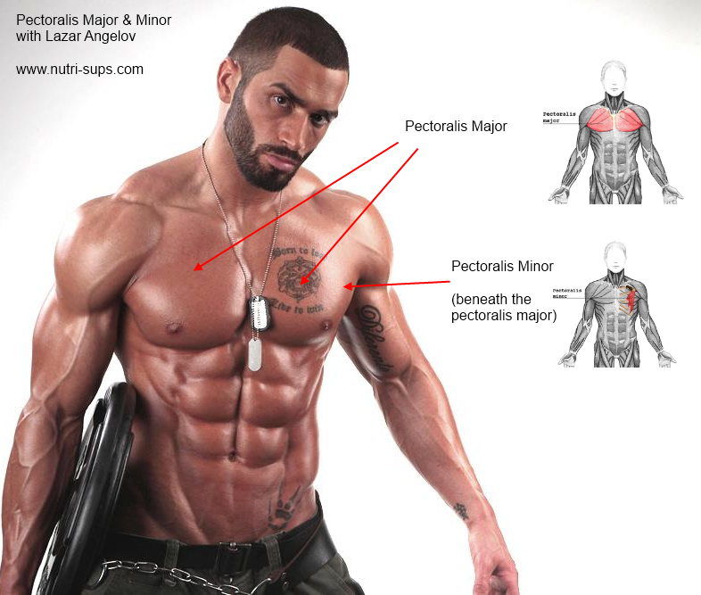 9 natural bodybuilders with most aesthetic chest pecs