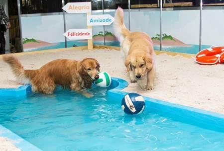 Pet&Play reúne complexo de atividades para cães no Shopping ABC