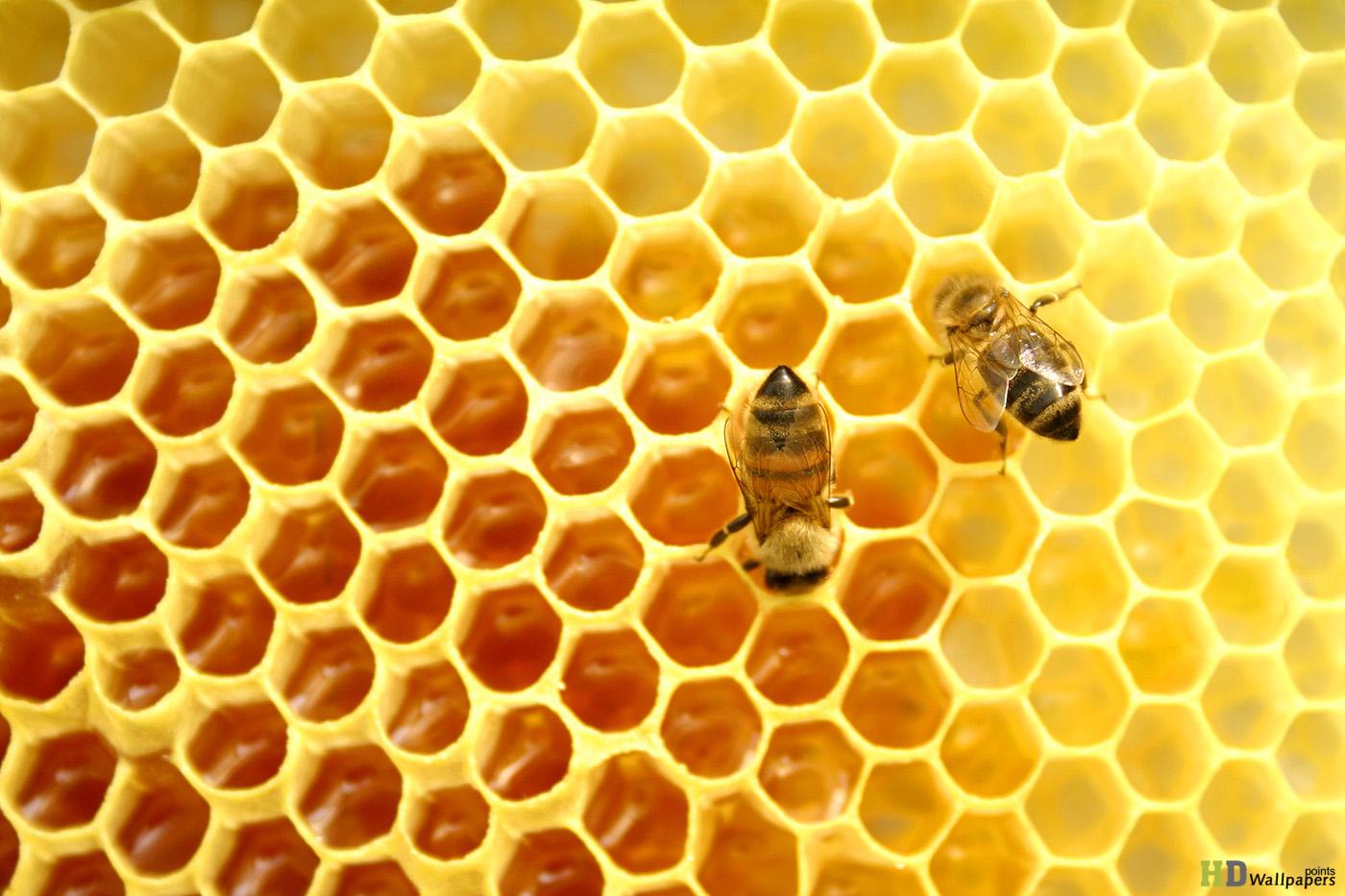 تركيا العسل الطبيعية, العسل العضوية تركيا