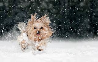 Foto anjing dan salju
