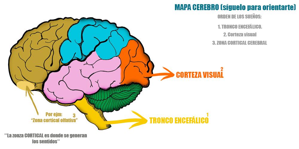 Lujoso Partes De Etiquetado Del Cerebro Colección de Imágenes ...