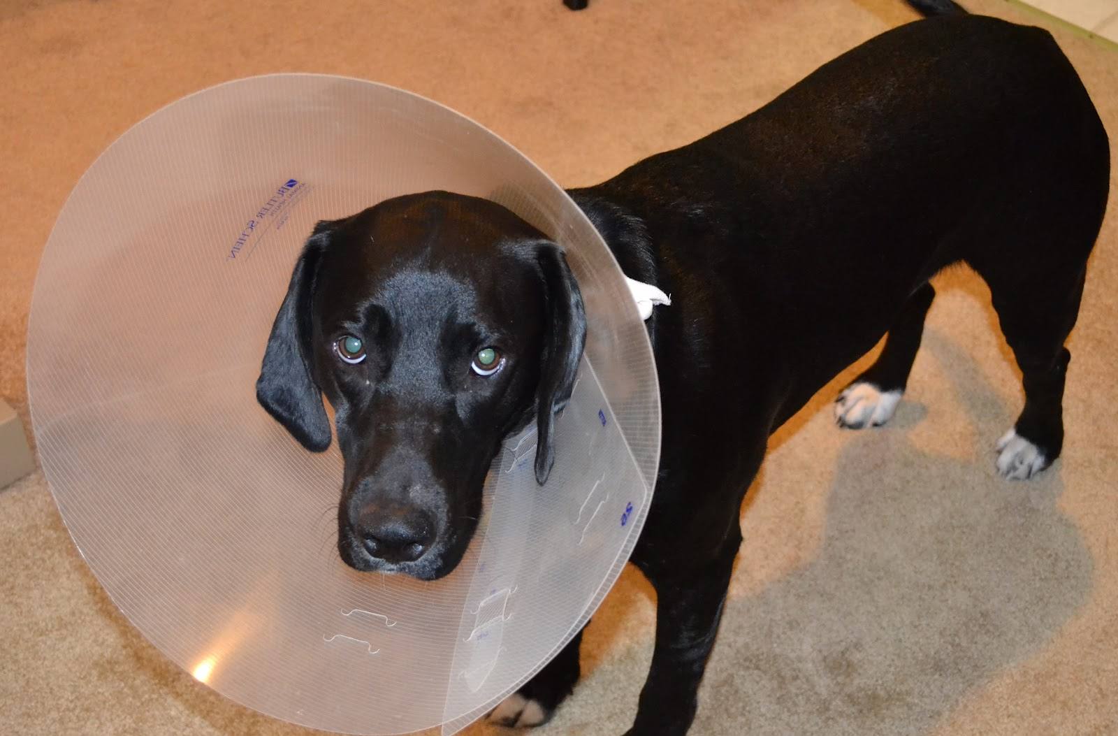 Mildly Annoyed Dog Meme Mildly Annoyed Dog Was Mildly