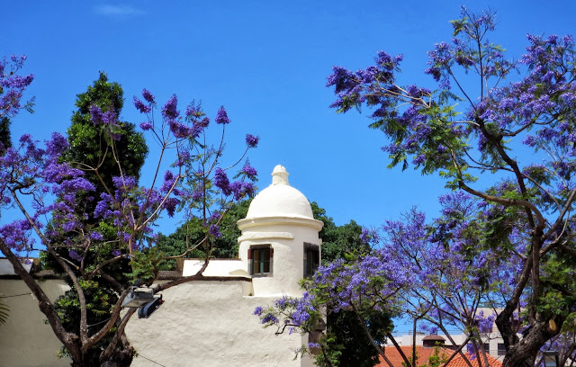 flowers and the Palácio de São Lourenço tower