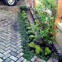 Belajar Membuat Taman & Mengenal Tanaman © wahyu.web.id