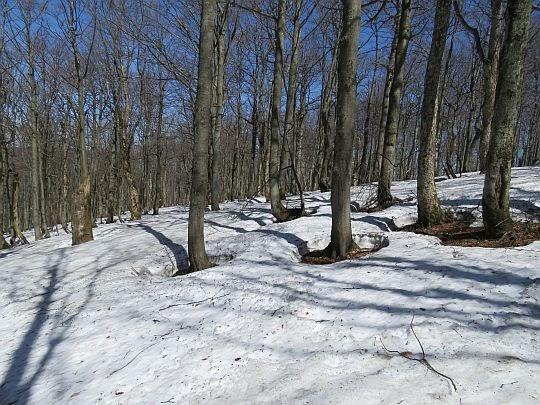 Las na Płaszy.