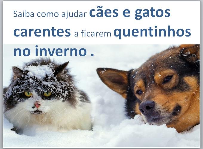 IDÉIAS PARA AQUECER CÃES E GATOS NO INVERNO  5f52b979697