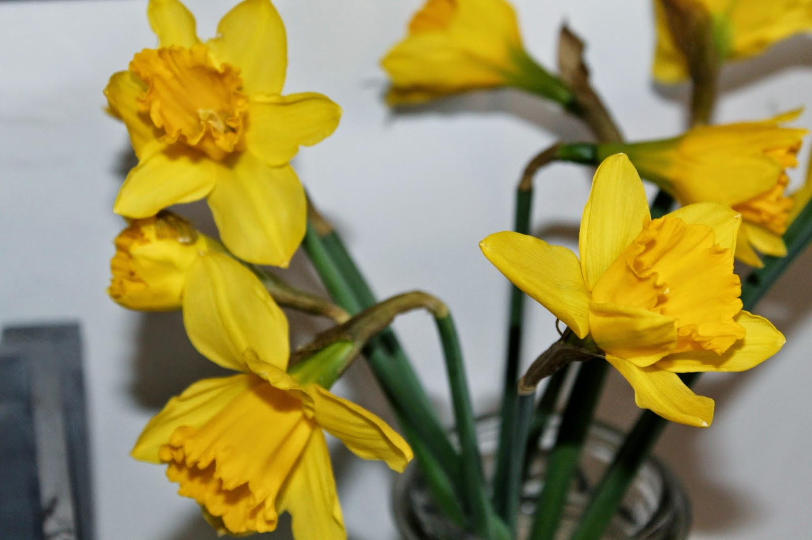 daffodils-lovemysimplehome.com