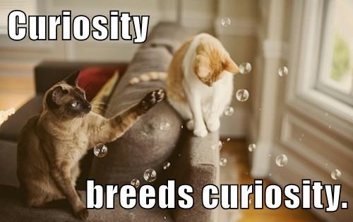 Curiosity%2Bbreeds%2Bcuriosity growth mindset resources curiosity breeds curiosity