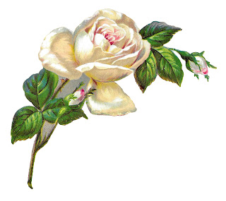 rose flower image botanical artwork transfer digital download