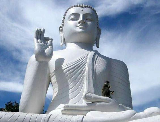 Đạo Phật Nguyên Thủy - Tìm Hiểu Kinh Phật - TRUNG BỘ KINH - Ví dụ con rắn