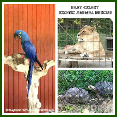 East Coast Exotic Animal Rescue in Fairfield Pennsylvania