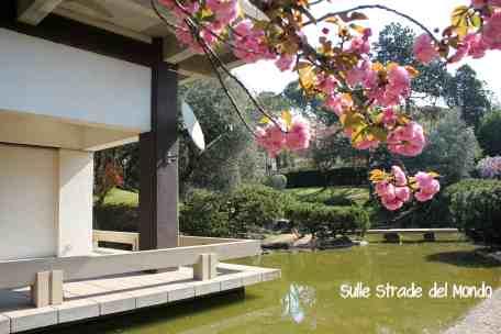 ciliegi in fiore nel giardino giapponese di roma