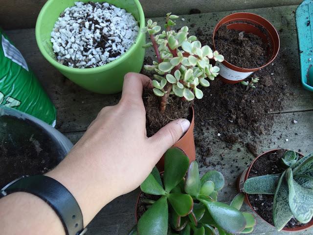 vetplantjes terrarium