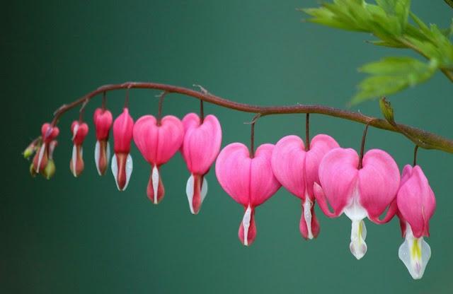 Kelembutan hati dan kesempurnaan aklhak Rasulullah Muhammad saw.