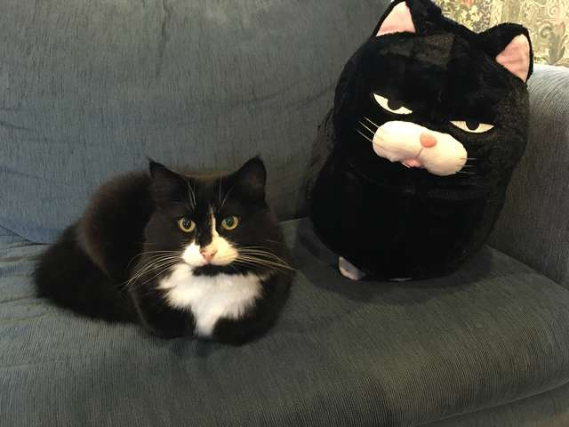Cat Fell In Love With A Pillow That Looks Just Like Him