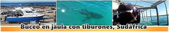 Buceo-en-jaula-con-tiburones-Sudafrica